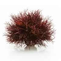 Biorb Sea Lilly Ornament Crimson